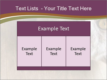 British cat PowerPoint Templates - Slide 59