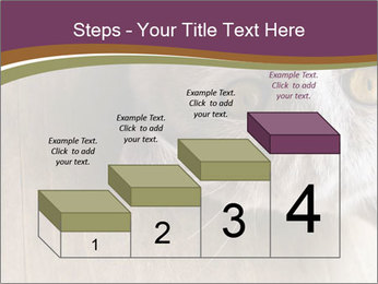 British cat PowerPoint Templates - Slide 64