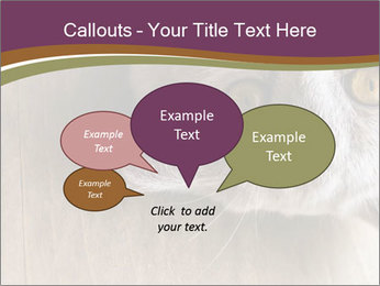 British cat PowerPoint Templates - Slide 73