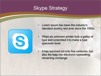 British cat PowerPoint Templates - Slide 8