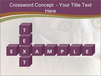 British cat PowerPoint Templates - Slide 82