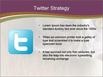 British cat PowerPoint Templates - Slide 9