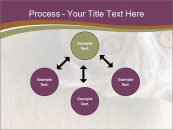 British cat PowerPoint Templates - Slide 91
