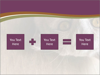 British cat PowerPoint Template - Slide 95