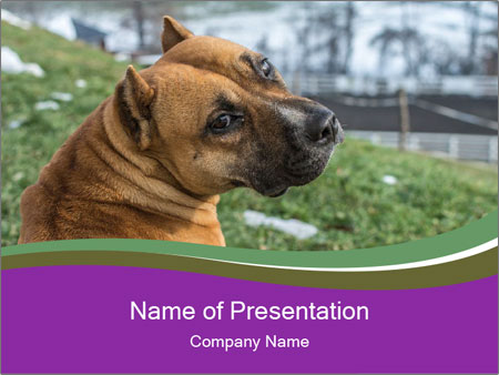 Dog For Fighting PowerPoint Templates