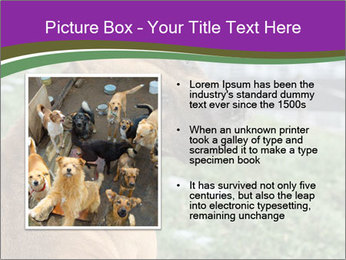 Dog For Fighting PowerPoint Template - Slide 13