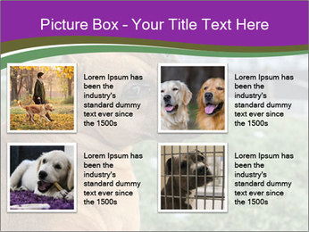 Dog For Fighting PowerPoint Templates - Slide 14