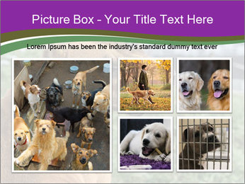 Dog For Fighting PowerPoint Template - Slide 19