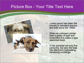 Dog For Fighting PowerPoint Template - Slide 20