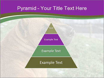 Dog For Fighting PowerPoint Templates - Slide 30