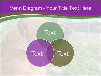 Dog For Fighting PowerPoint Template - Slide 33