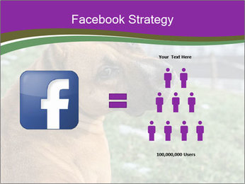 Dog For Fighting PowerPoint Templates - Slide 7