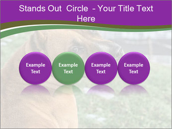 Dog For Fighting PowerPoint Template - Slide 76