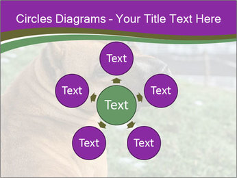 Dog For Fighting PowerPoint Templates - Slide 78