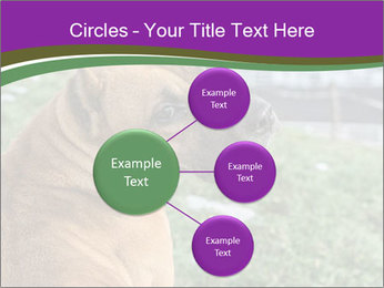 Dog For Fighting PowerPoint Templates - Slide 79