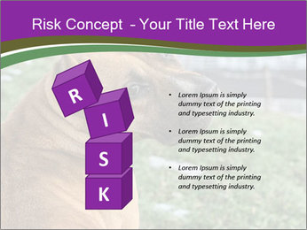Dog For Fighting PowerPoint Templates - Slide 81