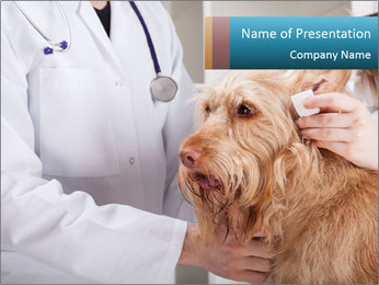 Dog at veterinary clinic PowerPoint Template
