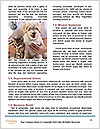 0000091300 Word Templates - Page 4