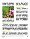 0000091317 Word Templates - Page 4