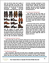 0000091336 Word Template - Page 4