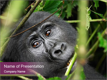 Uganda PowerPoint Template - Slide 1