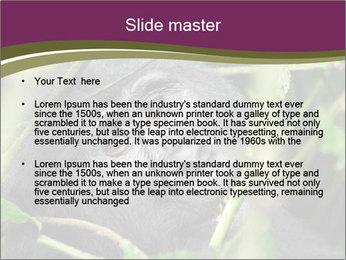 Uganda PowerPoint Template - Slide 2