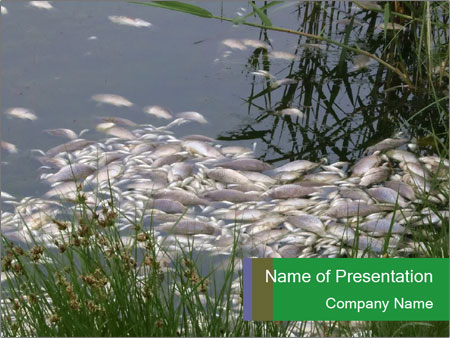 Dead fish PowerPoint Template