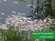 Dead fish PowerPoint Templates