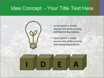 Dead fish PowerPoint Template - Slide 80