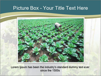 Organic Farmer PowerPoint Templates - Slide 15