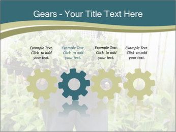 Organic Farmer PowerPoint Templates - Slide 48