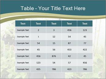 Organic Farmer PowerPoint Templates - Slide 55