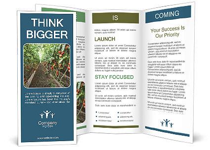 0000091386 Brochure Template