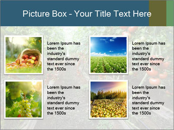 Tomatoes PowerPoint Template - Slide 14