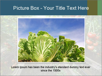 Tomatoes PowerPoint Template - Slide 16