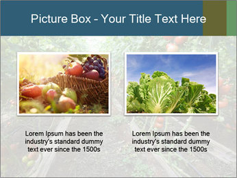 Tomatoes PowerPoint Template - Slide 18