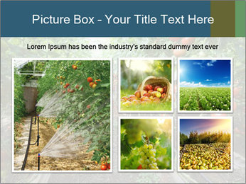 Tomatoes PowerPoint Template - Slide 19
