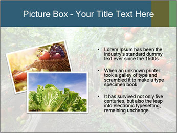 Tomatoes PowerPoint Template - Slide 20