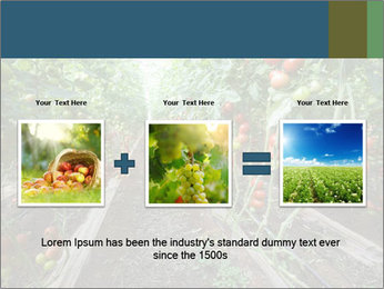 Tomatoes PowerPoint Template - Slide 22