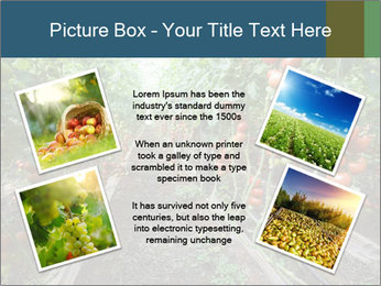 Tomatoes PowerPoint Template - Slide 24