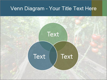 Tomatoes PowerPoint Template - Slide 33