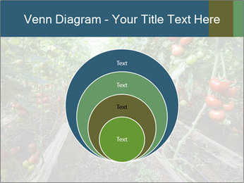 Tomatoes PowerPoint Template - Slide 34