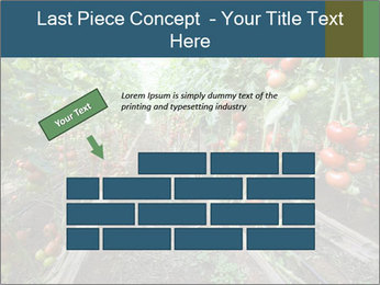 Tomatoes PowerPoint Template - Slide 46