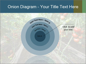 Tomatoes PowerPoint Template - Slide 61