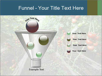 Tomatoes PowerPoint Template - Slide 63