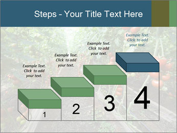 Tomatoes PowerPoint Template - Slide 64