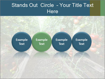 Tomatoes PowerPoint Template - Slide 76