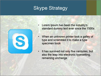Tomatoes PowerPoint Template - Slide 8
