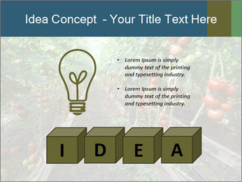 Tomatoes PowerPoint Template - Slide 80