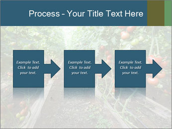 Tomatoes PowerPoint Template - Slide 88